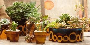 Botaniqa Jardines