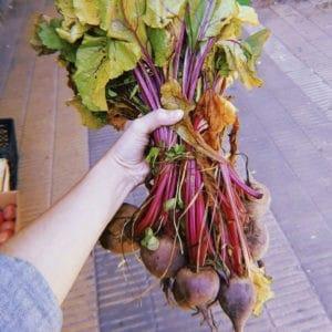 mercado punto verde buena cosecha 15