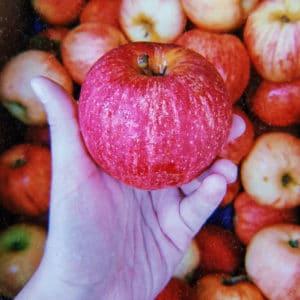 mercado punto verde buena cosecha 9